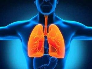 système respiratoire Alain Bernard